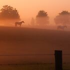 foggy horses by jhawa