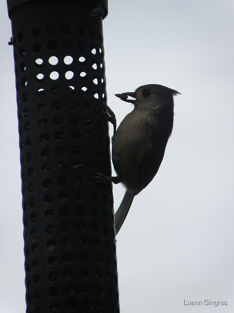 Titmouse and the Seed by Luann Gingras