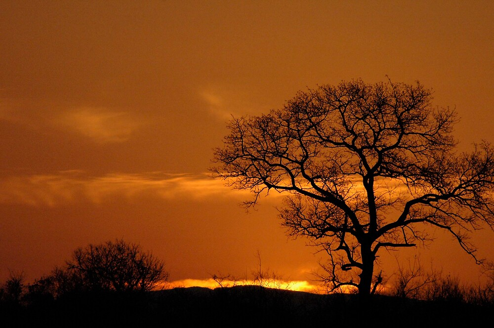 sunset in pungwe, south africa by Willie Baronet