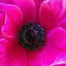 Fuchsia Anemone by Lynda Anne Williams