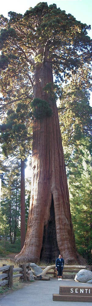 Sequoia National Park by Ergopower