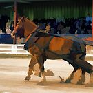 Pure Horsepower - Horse Pulling Event by NaturePrints