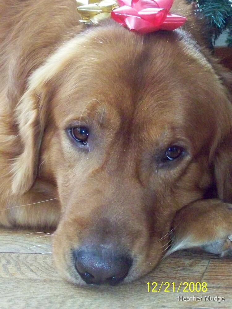 Chirstmas Dog(Comet Mudge) by Heather Mudge