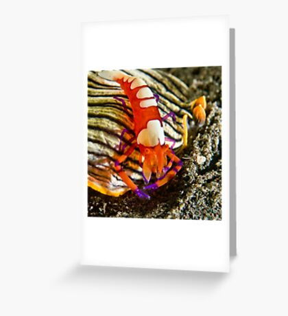 Emperor Shrimp on Nudibranch Greeting Card