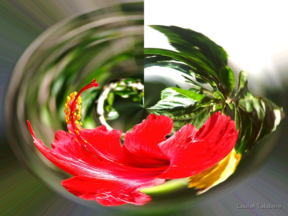 Swirling Hibiscus by Laurel Talabere