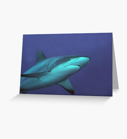 Reef Shark Greeting Card