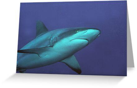 Reef Shark by Dan Sweeney