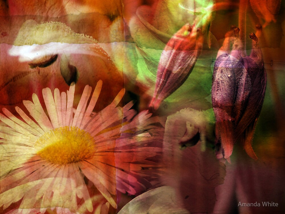 Floral Montage Series 4 by Amanda White