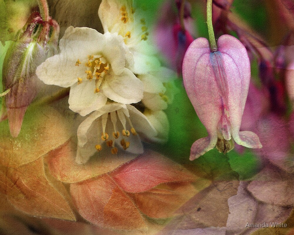 Floral Montage Series 5 by Amanda White
