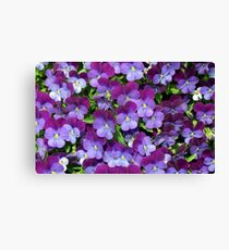 Miniature pansies Canvas Print