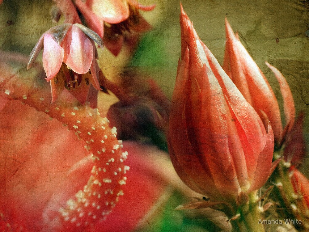 Floral Montage Series 10 by Amanda White