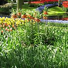 Tulips and Crown Imperials - Keukenhof Gardens by BlueMoonRose