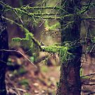 { where the moss grows } by Lucia Fischer