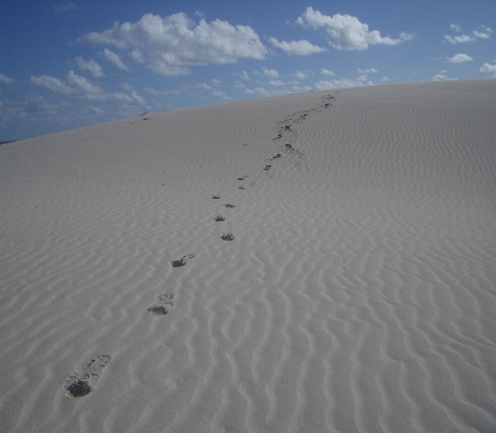 Sandunes of Eucla, Western Australia by wpcrighton