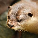 Furry Otter by Aneurysm