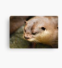 Furry Otter Canvas Print