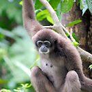 Monkey by Aneurysm