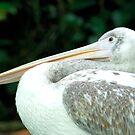 Pelikan by Aneurysm