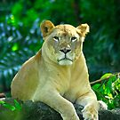 Lioness by Aneurysm