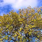 Blue Sky and Autumn Leaves by BlueMoonRose
