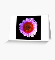 pink daisy outline Greeting Card