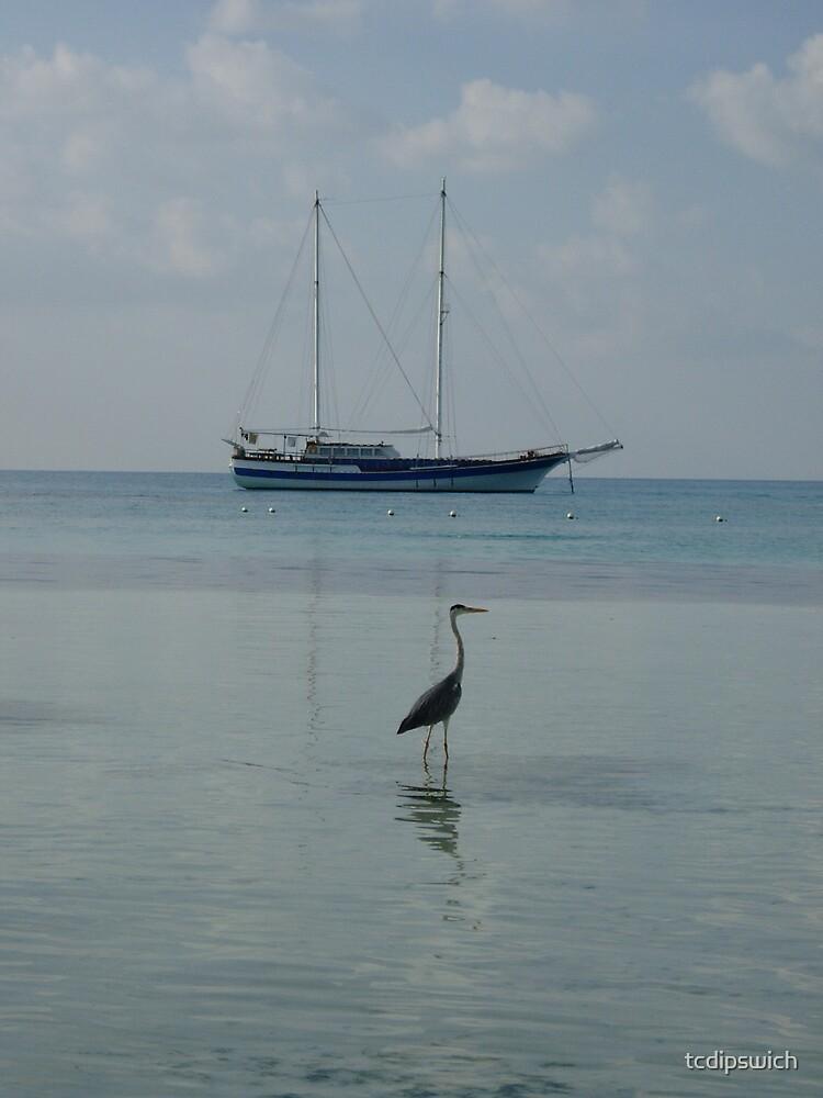 Maldive Heron by tcdipswich