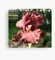 "Bearded Iris - ""Rogue"" Canvas Print"