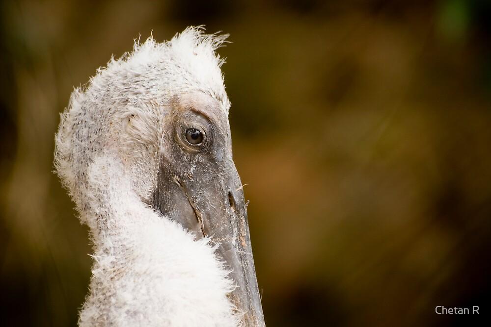 Pelican by Chetan R