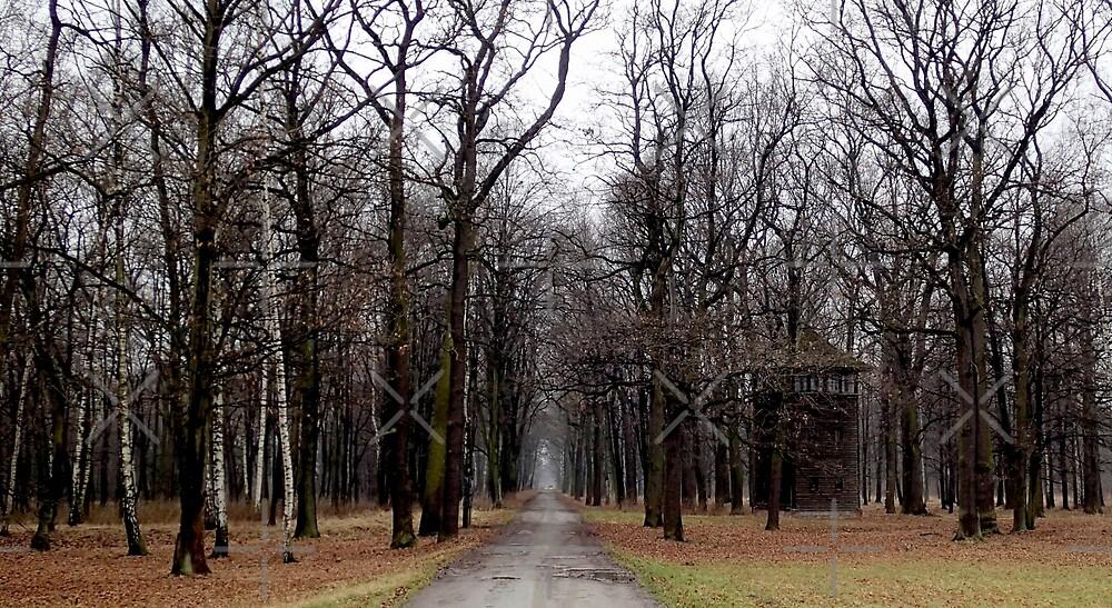 Auschwitz-Birkenau by SHappe