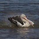 Pelican Bath by Kym Bradley