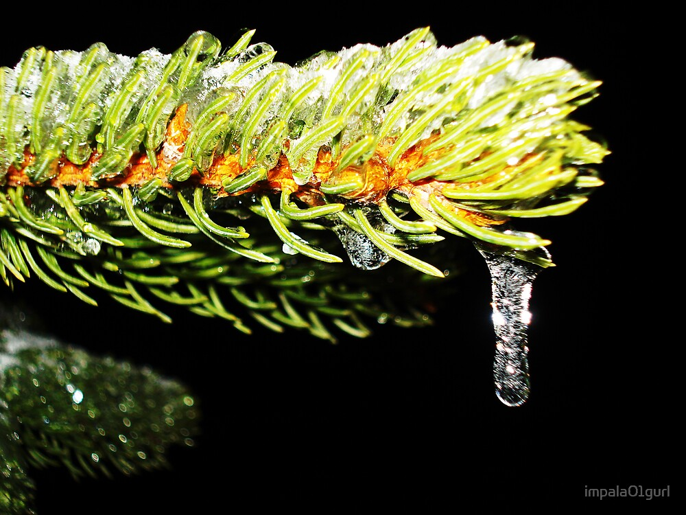 Pine Covered in Ice by impala01gurl