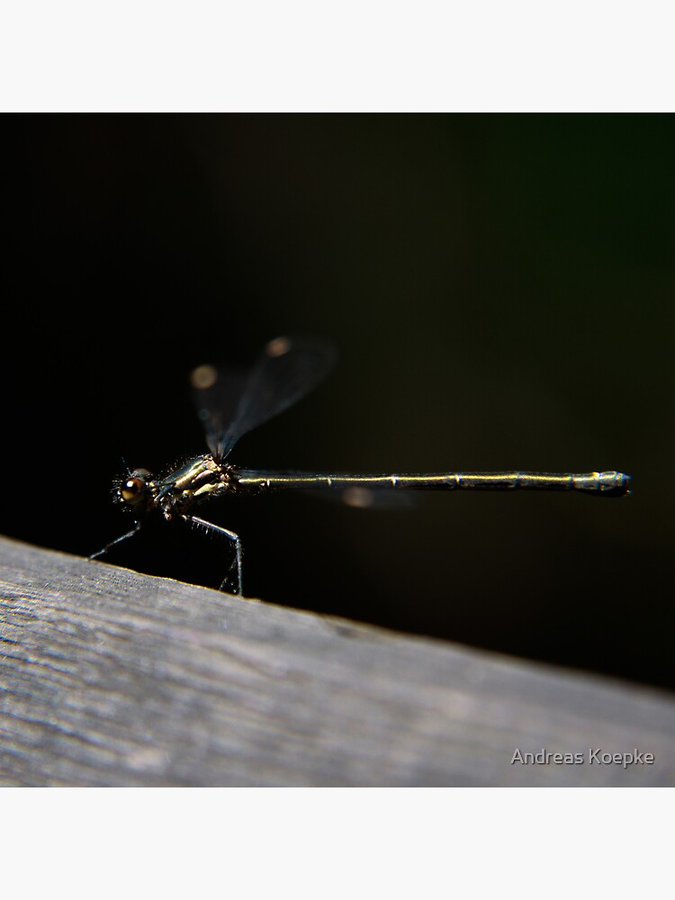 Dragonfly by mistered