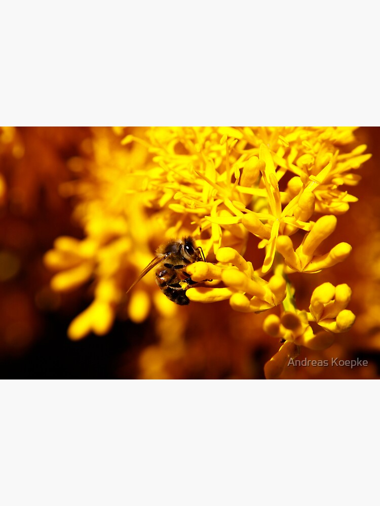 Bee on christmas tree by mistered