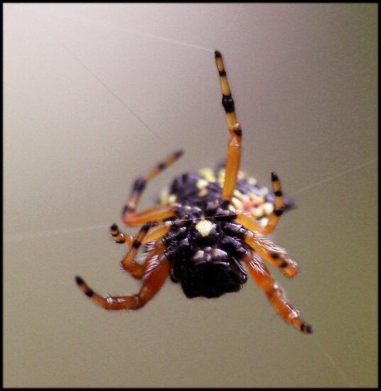 Web Master by Selina Tour