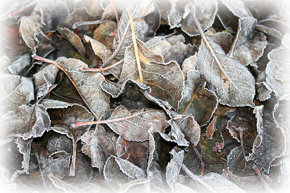 Frosted leaves by BizziLizzy