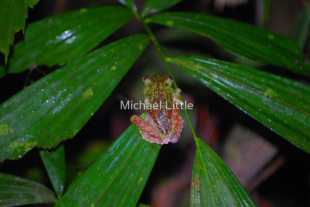 Rainfoest Frog by Michael Little
