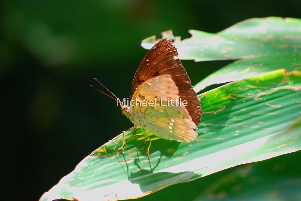 Moth by Michael Little