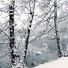 Winter's Veil by Jessica Jenney