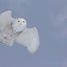 Flight by Steve Small