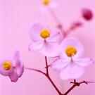 Uknown pink flower by George Kypreos