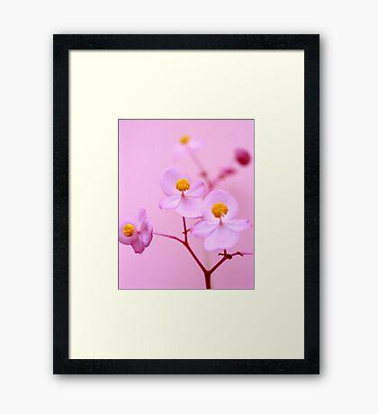 Uknown pink flower Framed Print