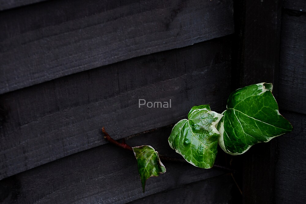 Life in Darkness by Pomal
