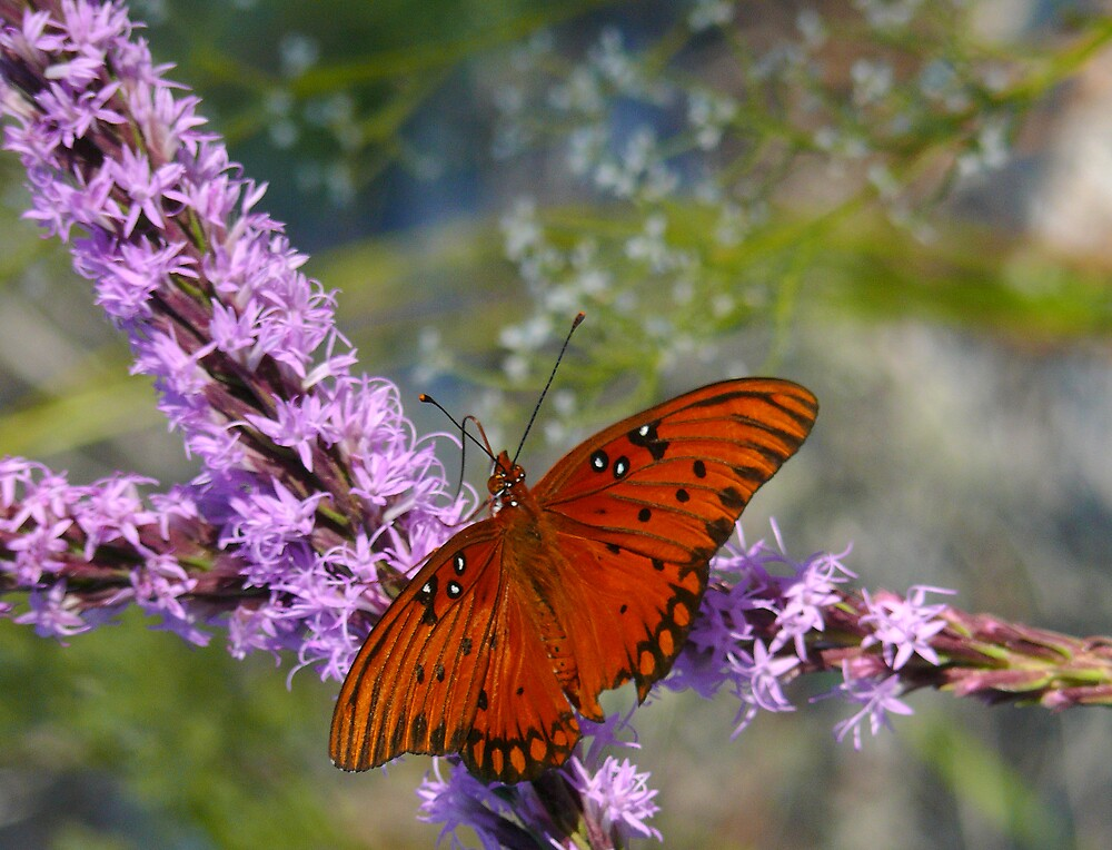 Butterfly on Wildflowers by Charlie Sawyer