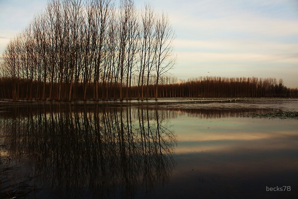 Tree's reflection 5 by becks78