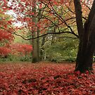 A carpet of leaves by miradorpictures