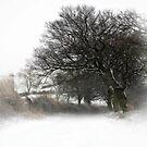 Winter by Chris Charlesworth