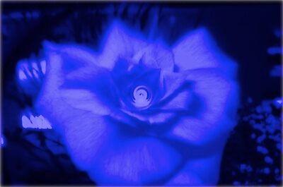 blue rose by e  owen