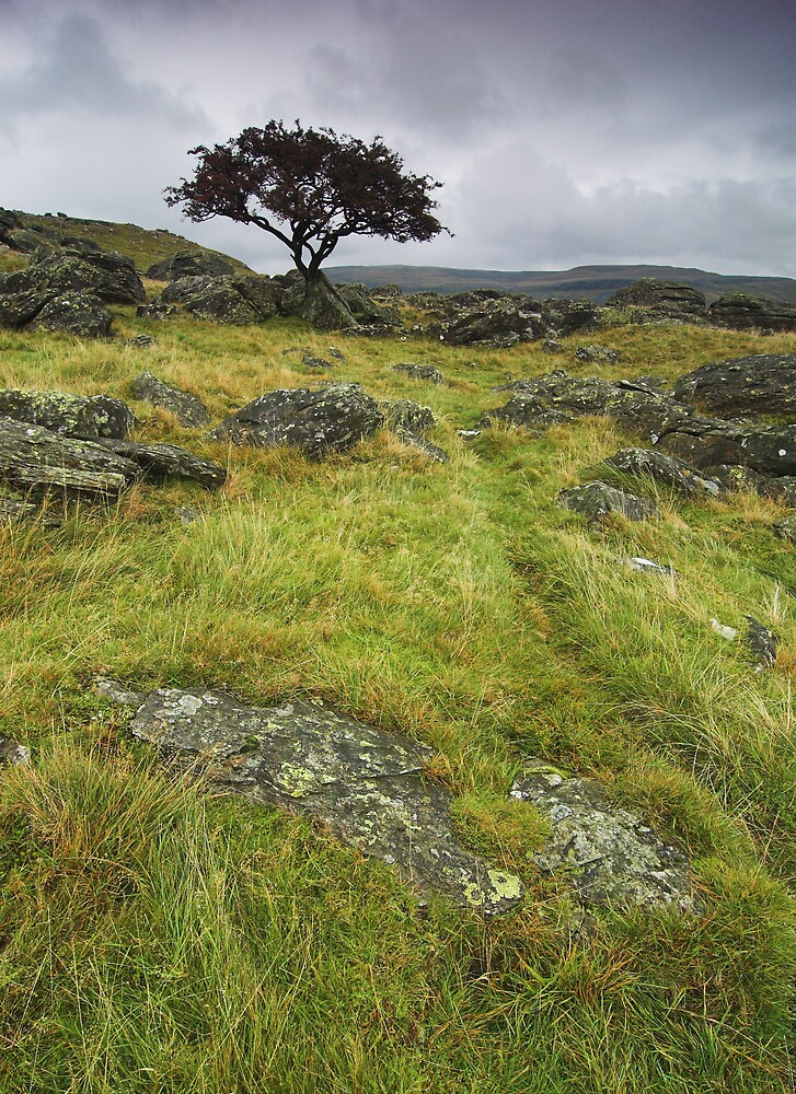 Lone Tree by NaturalBritain