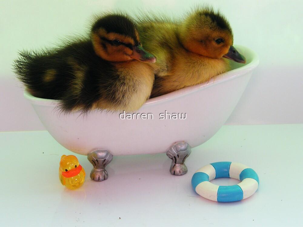 duckys bath night by darren  shaw
