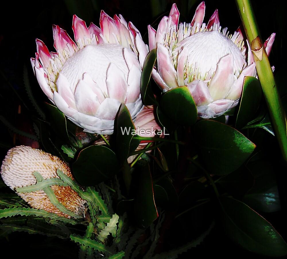 Flowers for Sale by WaleskaL